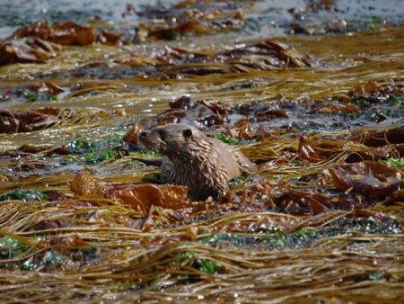 Otter Oscars photography